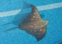 Мозаичное панно для бассейна